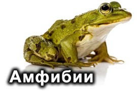 Амфибии (0)