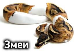 Змеи (4)
