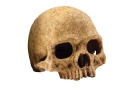 "Укрытие-декорация ""Череп примата"" - Exo-Terra Primate Skull - арт.: PT2855"