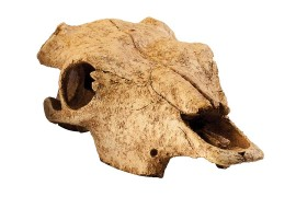 "Укрытие-декорация ""Череп бизона"" - Exo-Terra Buffalo Skull - арт.: PT2857"
