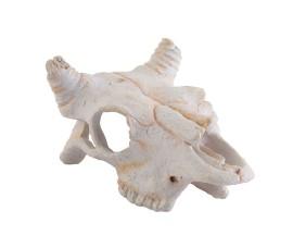 """Мини-укрытие """"Череп буйвола"""" -  Exo-Terra Buffalo Skull - арт.: PT2925"""