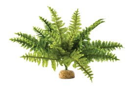 Растение иск. - Exo-Terra Rainforest Ground Plants - Boston Fern - Medium - арт.: PT2995