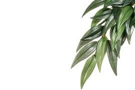 Растение иск. - Exo-Terra Hanging Rainforest Plants - Rucus (Silk) - Small - 35 x 20 см - арт.: PT3031