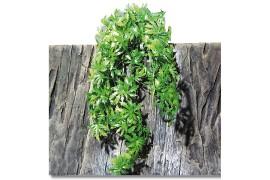 Растение иск. - JBL TerraPlanta Canabis - size L - 65 см - арт.: 6803000