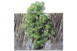 Растение иск. - JBL TerraPlanta Casuarina - size M - 50 см - арт.: 6803500
