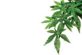 Растение иск. - Exo-Terra Hanging Rainforest Plants - Abuliton (Silk) - Small - 40 x 25 см - арт.: PT3032