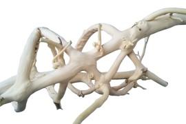 Лиана спиральная белая (нат.) - арт.: YP-0236