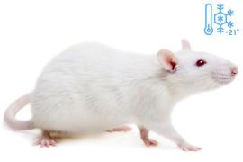 Крысы кормовые (замороженные, -21°C)