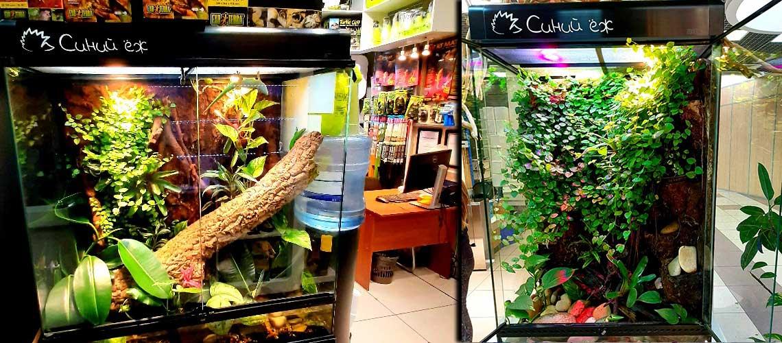 Змеиный магазин «Синий ёж»